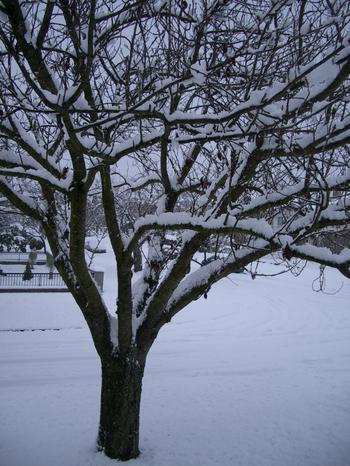 123103_lots_of_snow_005.jpg
