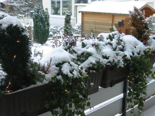 291205_snow